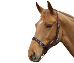 Adjustable Headcollar with Clip H72