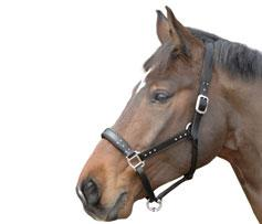 Leather Bling Headcollar H85