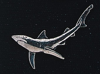 pewter shark badge