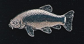 pewter tench badge