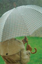 Tartan Wooden Crook Umbrella